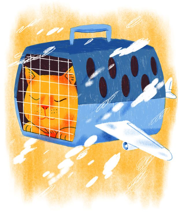 How to pack your fat cat as carry-on luggage - The Globe and Mail