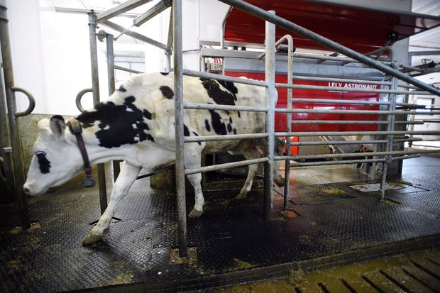 Aug. 30: Give way on dairy, how?: Plus other letters to the editor