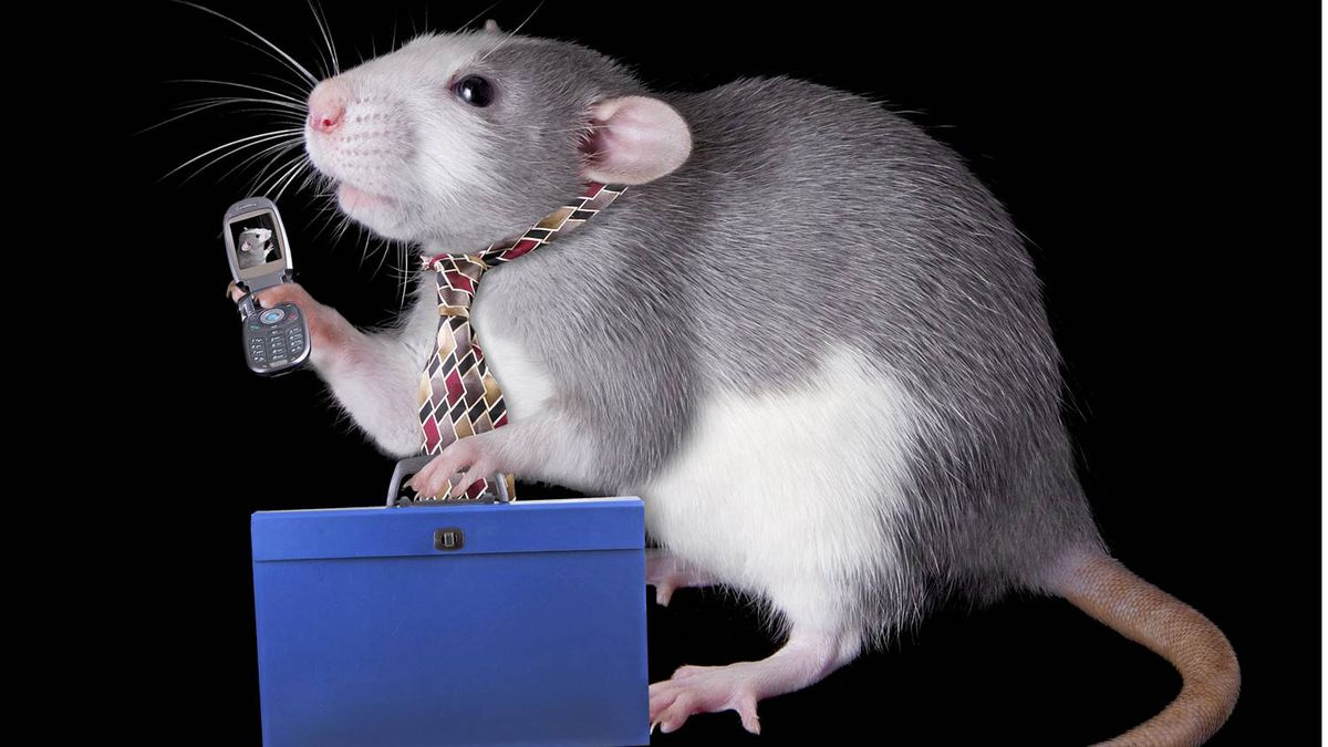 Why the rat race is good for your soul