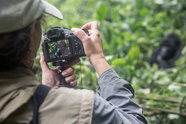 How to plan the ultimate mountain gorilla safari
