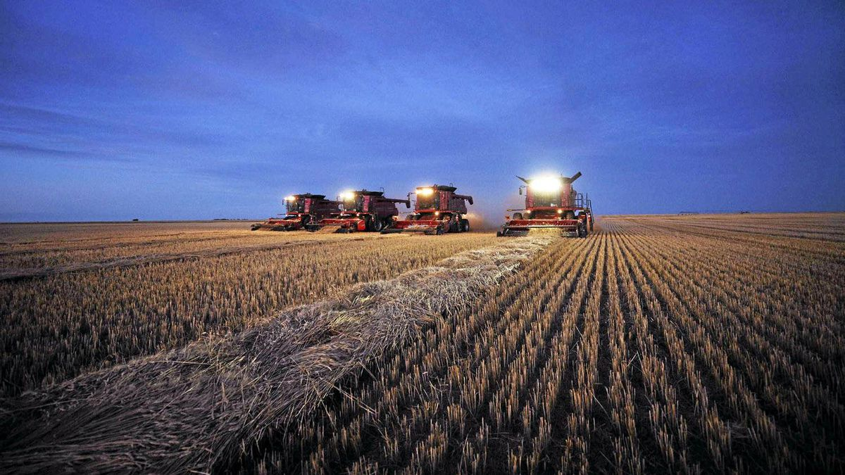 Combines harvest wheat on the Stephen and Brian Vandervalk farm near Fort MacLeod, Alberta, in this file picture taken, September 26, 2011.