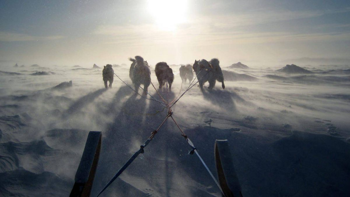 A dog team treads the snow-swept landscape in Iqaluit on Thursday.