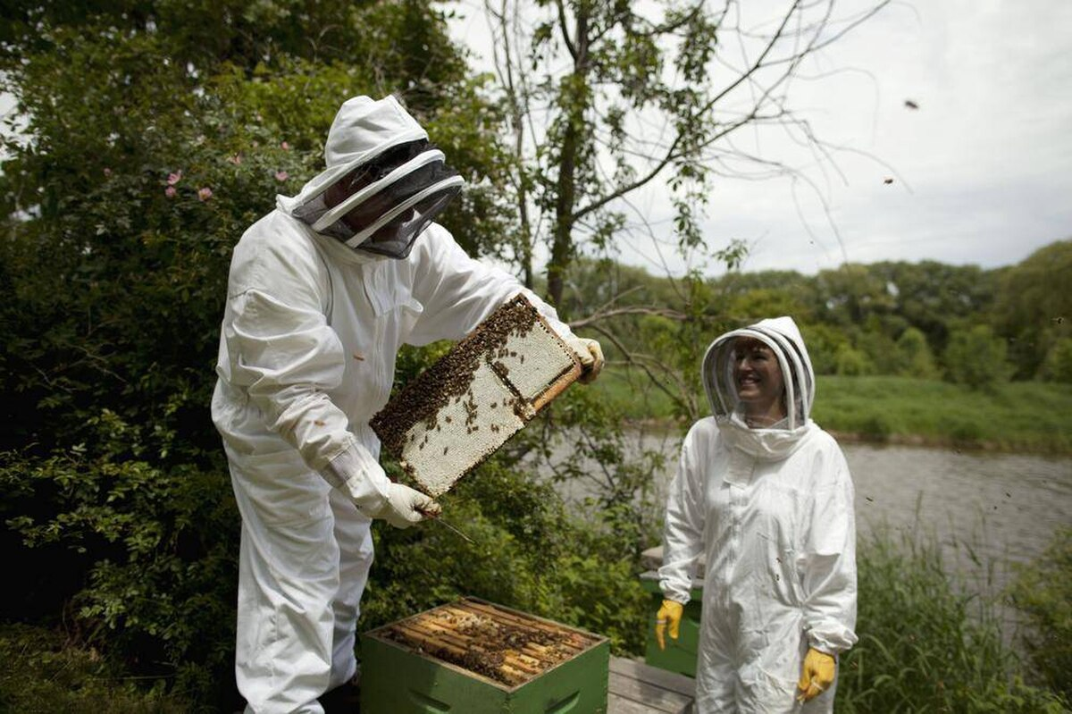 the new buzz backyard beekeeping the globe and mail