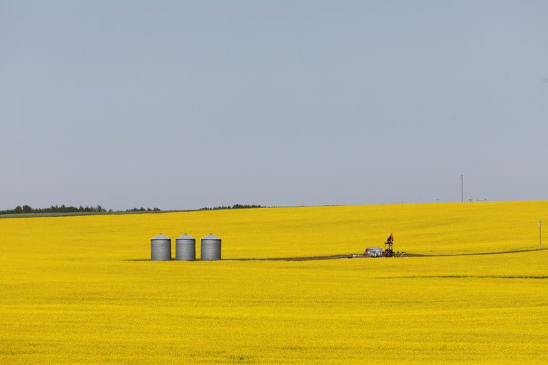 China refuses to provide evidence of pests in canola, Canada says in WTO complaint