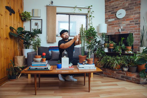 Favourite room: It's a jungle in this Toronto living room