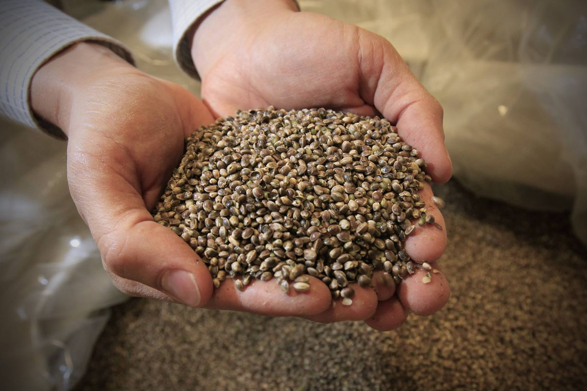 Video chat: How hemp helps Manitoba business grow - The
