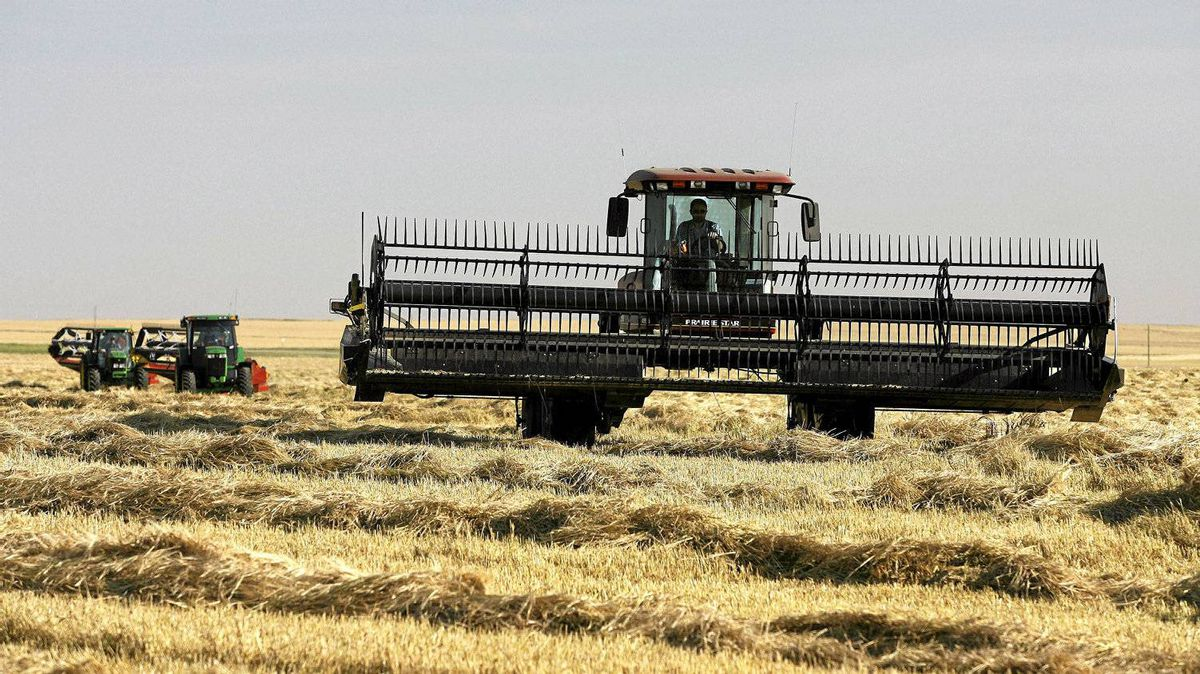 The Conservative government is set to scrap the wartime-era monopoly given to the Canadian Wheat Board.