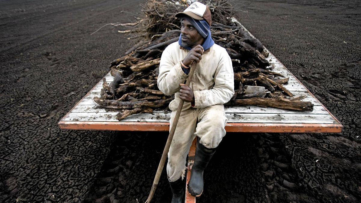Victor Cooper, 43, a seasonal worker from Trinidad, in his 9th year of working for Paul Sopuch and Sons farm, clears wood from the fields that has been pushed up through the soil by the frost.