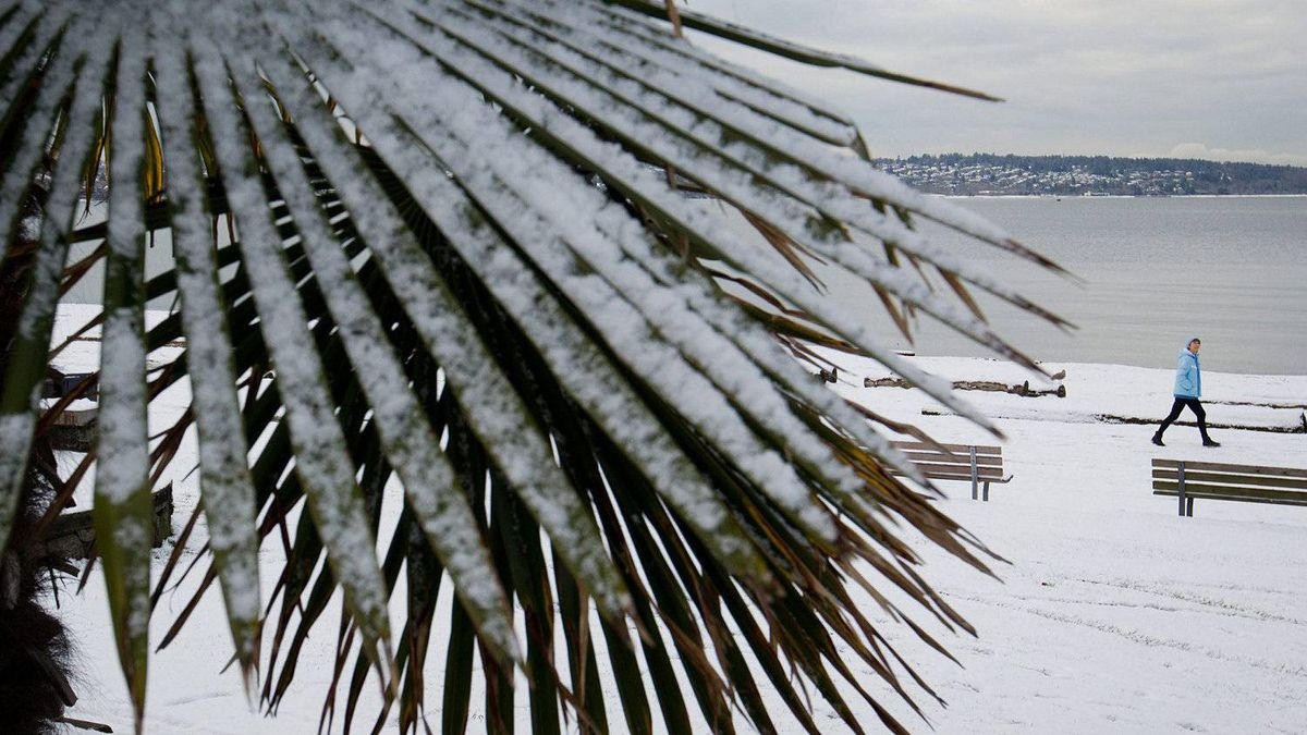 Snow clings to the leaves of a palm tree as a woman walks along English Bay Beach in Vancouver, B.C., on Monday January 16, 2012.