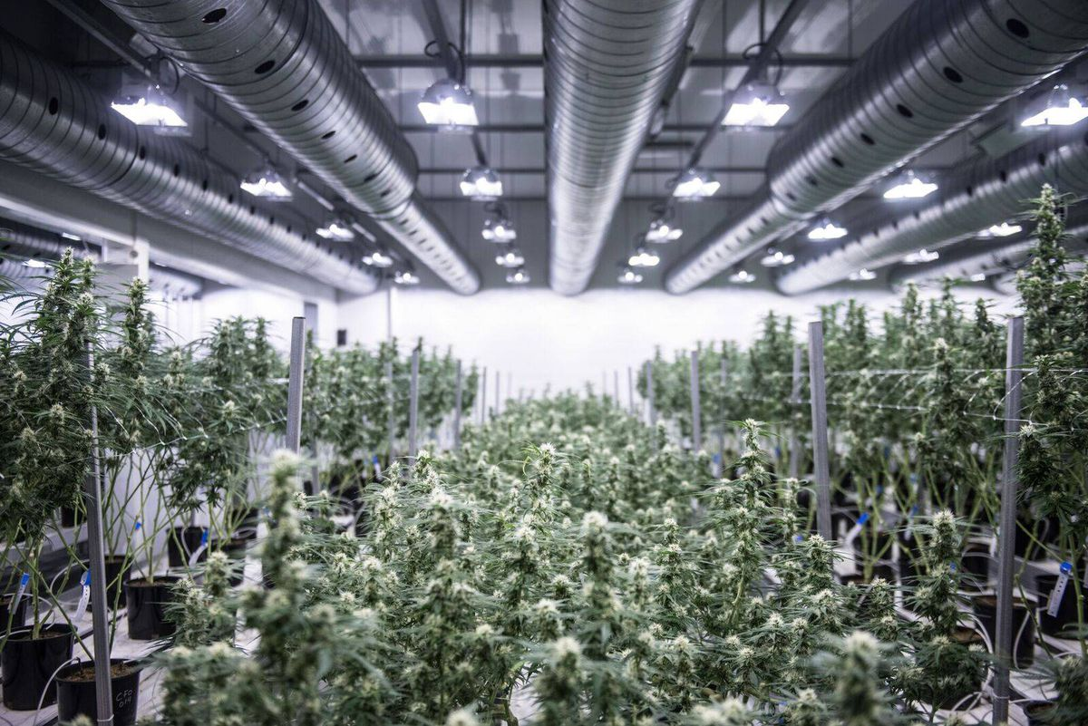 Marijuana Industry Searches For Large Spaces To Grow Crops