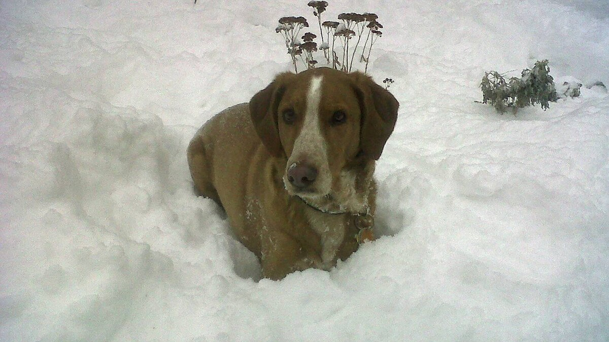 Kim Velocci Leite photo: Snow Day February 2, 2011 - Cooper looks so cute in the snow!