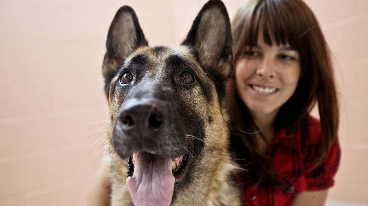 Reader response convinced Amberly McAteer to tour Toronto Animal Services, where she met this lovely purebred German Shepherd