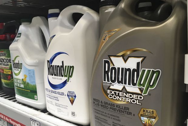 Roundup weed killer: Jury agrees Monsanto chemical contributed to California man's cancer