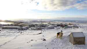 A dog howls from the hillside overlooking Iqaluit.
