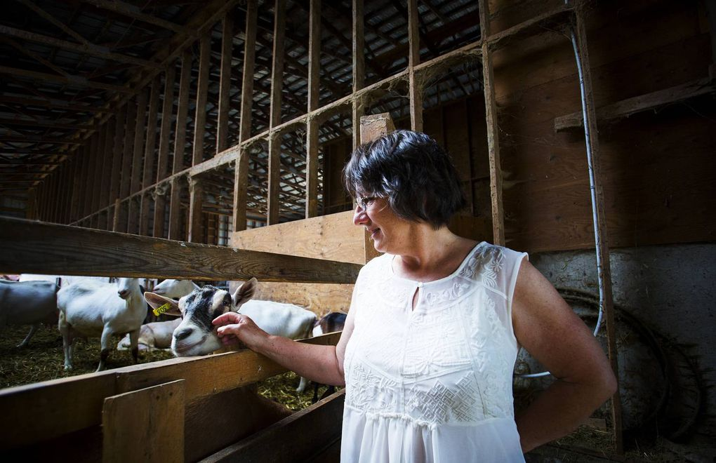 Making cheese naturally on the farm in Agassiz, B.C.