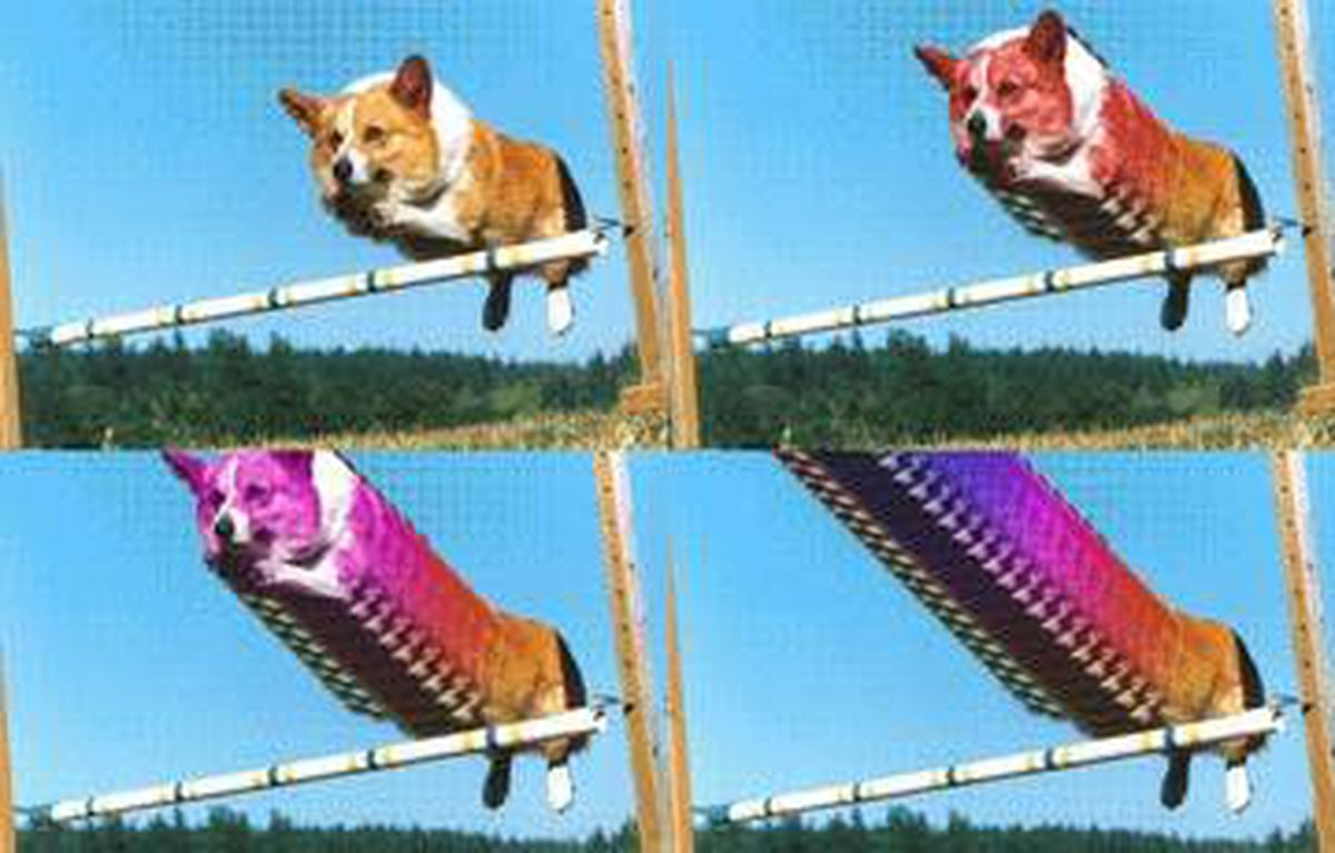 Stephanie Davidson's work from Save for Web, a recent exhibition of GIF art in Toronto, features looped-together images of a dog in motion. ! The show put a contemporary spin on the low-tech iconography of the nineties online world.
