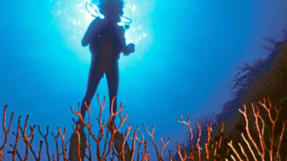 A diver is suspended among Bonaire's soft coral in the Netherlands Antilles.