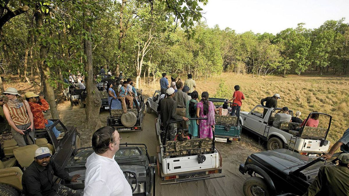 When a leopard or tiger is spotted in Bandhavgarh, all the tours stop to take a look.