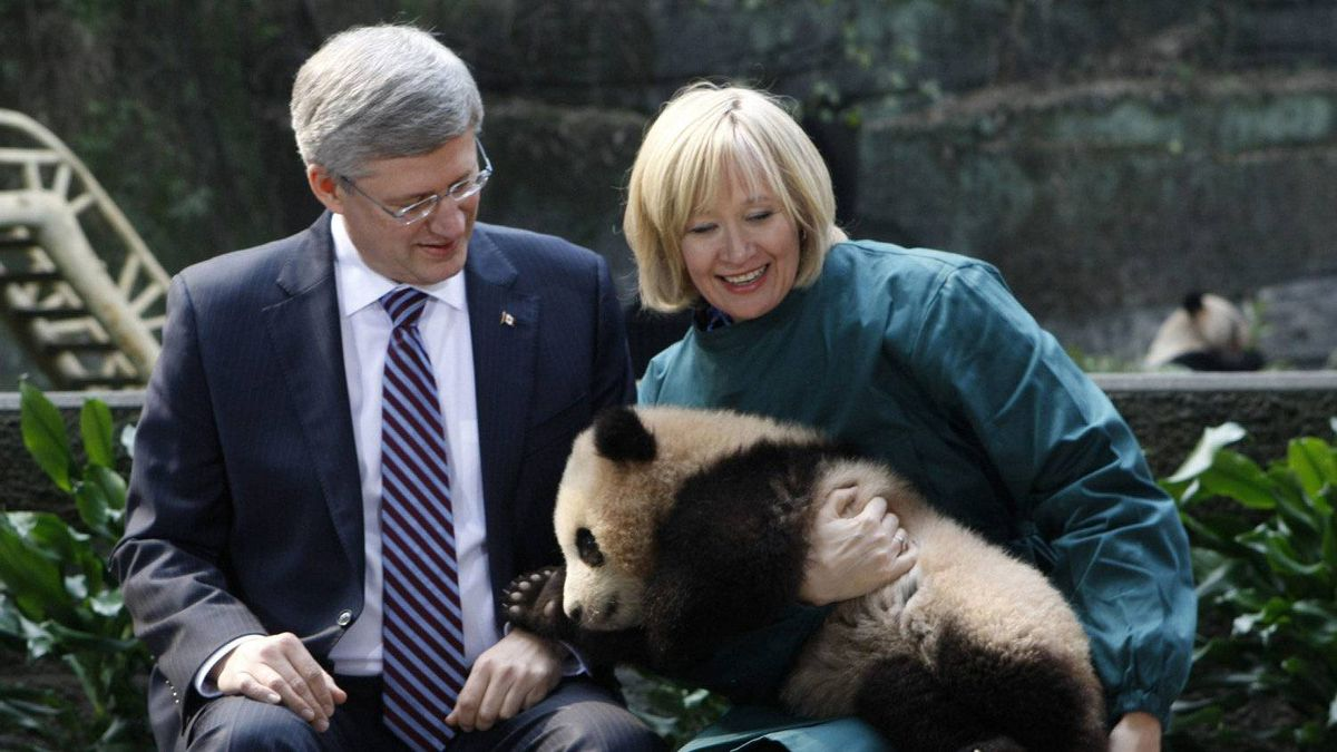 Prime Minister Stephen Harper looks on as his wife, Laureen, holds a panda in Chongqing, China on Saturday Feb. 11, 2012. Two giant pandas will call Canada home for the next 10 years. (AP Photo/The Canadian Press, Adrian Wyld)