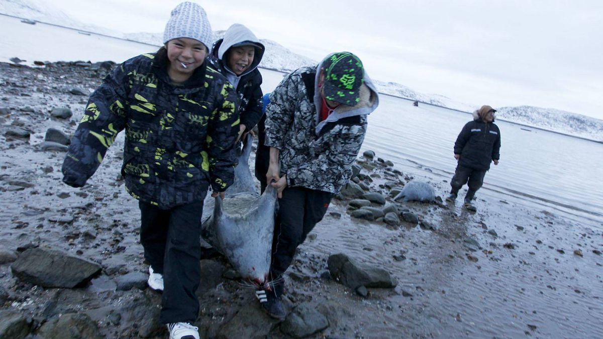 Schoolchildren help hunters returning from a seal hunt at Cape Dorset, Nunavut.