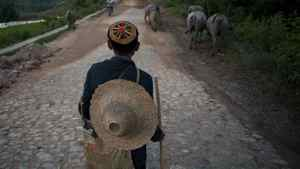 A herder from the Lahu minority drives his water buffalo through Mangmei village near Mending, Yunnan Province, China on June 9, 2011. Sino-Forest owns much of the forest land around Mangmei.