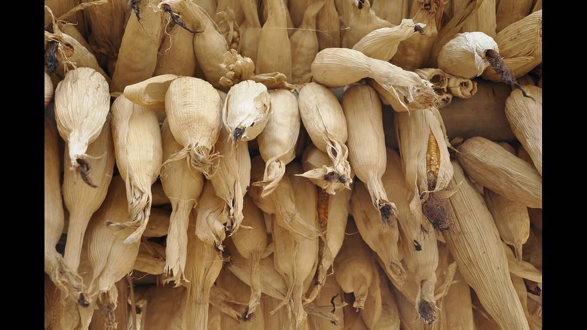 Patricia Brown photo: While hiking along the trails in Nepal we came across these drying corn husks.