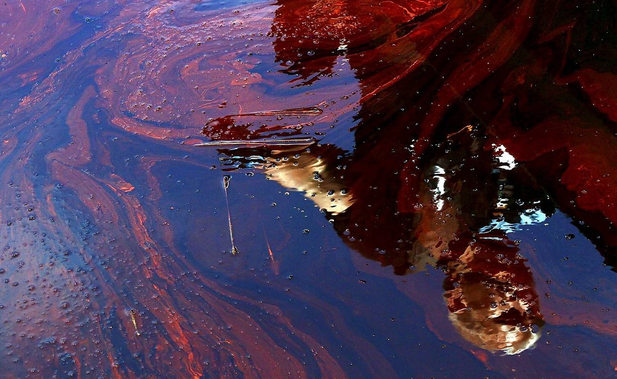 Oil from the Deepwater Horizon gathers near Blind Bay, La., on May 26.