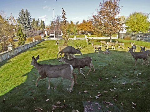 Invermere, B.C., residents support deer cull, unofficially