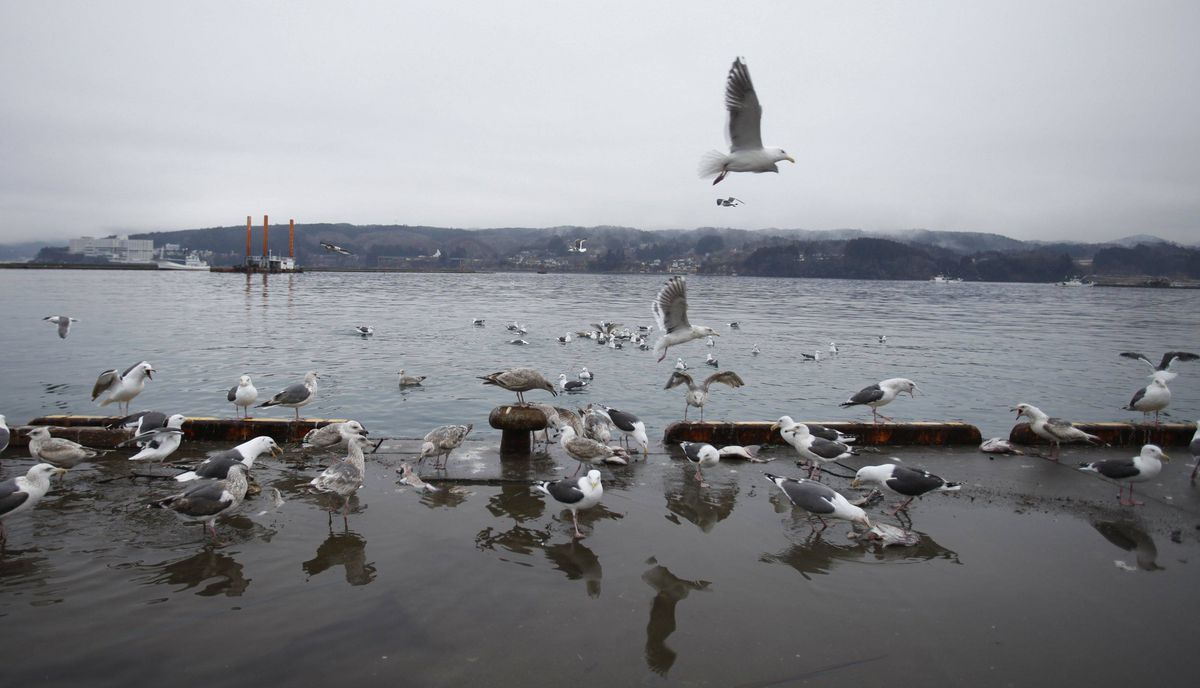 Seagulls are pictured near the fishing port of Minamisanriku town, in Miyagi prefecture, northeastern Japan February 23, 2012. Only 5.8 percent of boats in the fishing town survived the March 11 tsunami according to the municipal government.