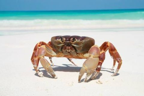 How our Costa Rican beach paradise turned into night of the living crabs