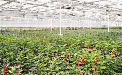 Aphria buying Broken Coast Cannabis for $230M in stock and cash