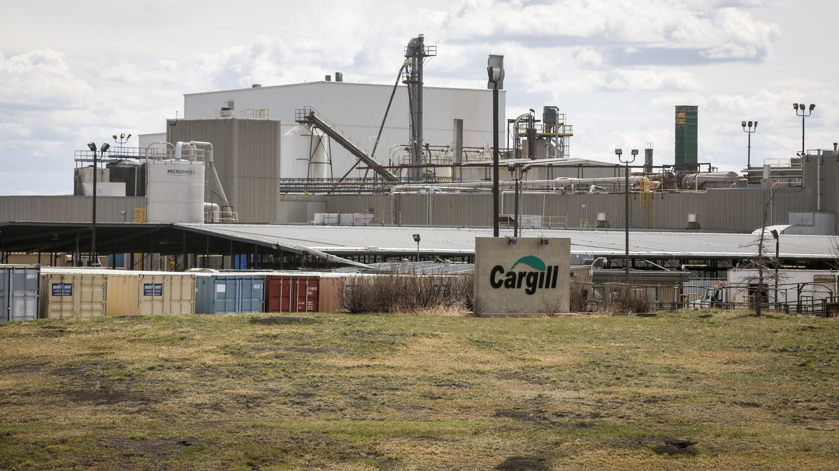 Alberta will vaccinate 2,000 employees at Cargill meat packing plant  image
