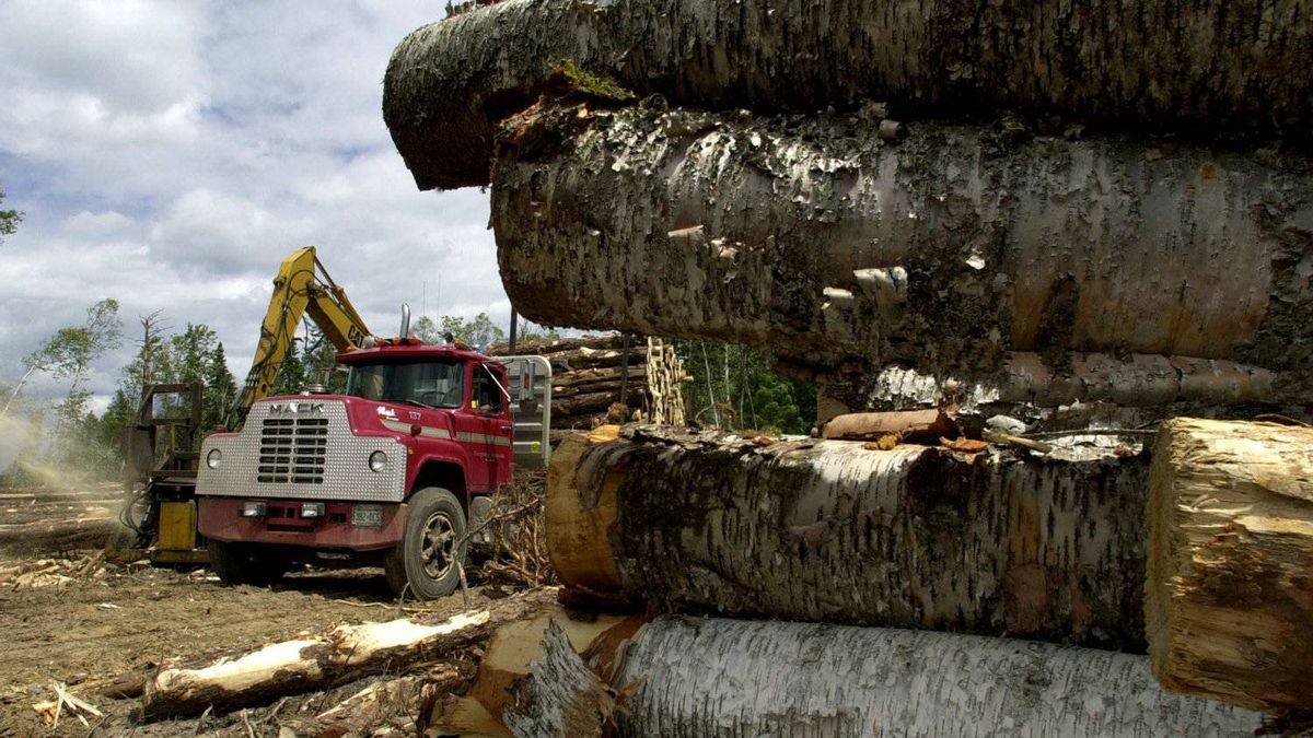 A file photo shows logging near Hwy 17