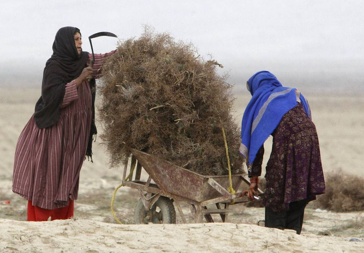 A girl and her mother gather dried shrubs for use in cooking and heating in Bagram, north Afghanistan.