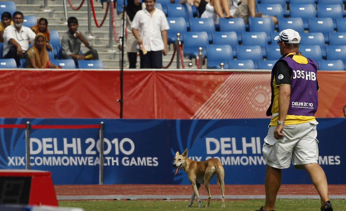 A stray dog is seen in the infield following a Men's 400m Hurdles qualification during the Commonwealth Games at the Jawaharlal Nehru Stadium in New Delhi, India, Saturday, Oct. 9, 2010. (AP Photo/Anja Niedringhaus)