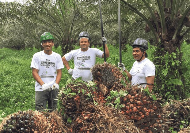 Palm Done Right allows farmers and workers to gain a higher income and improved working conditions, with Fairtrade premiums enabling them to invest in community projects.