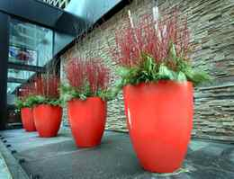 """Jan 27, 2010 - Red planters in front of the Hilton hotel, for style section column, """"spotted"""" Photo: Charla Jones/Globe and Mail"""