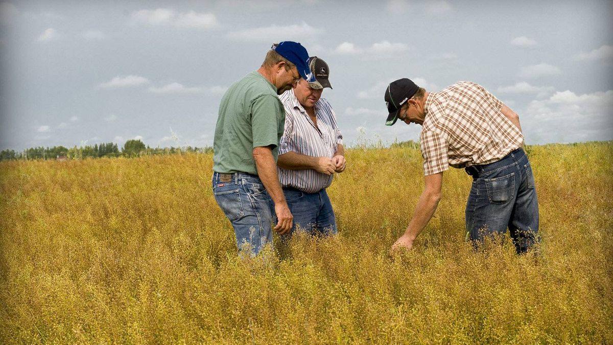 Dan Vandenhurk, Ron Emde and Colin Rosengren of Three Farmers.