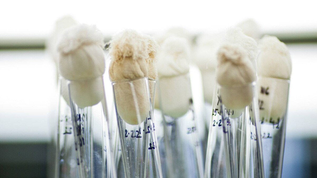 Test tubes in a laboratory at the International Rice Research Institute headquarters in Los Banos, the Philippines.