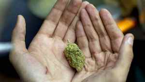 A man shows off a large bud of marijuana in Toronto on April 20, 2011.