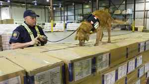 A border officer watches his dog sniff through shipping boxes at a Canada Border Services Agency warehouse in Montreal on April 21, 2009.
