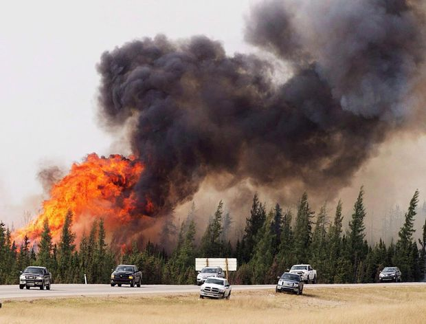 Fewer trees, less undergrowth: Study says wildfires changing boreal forest