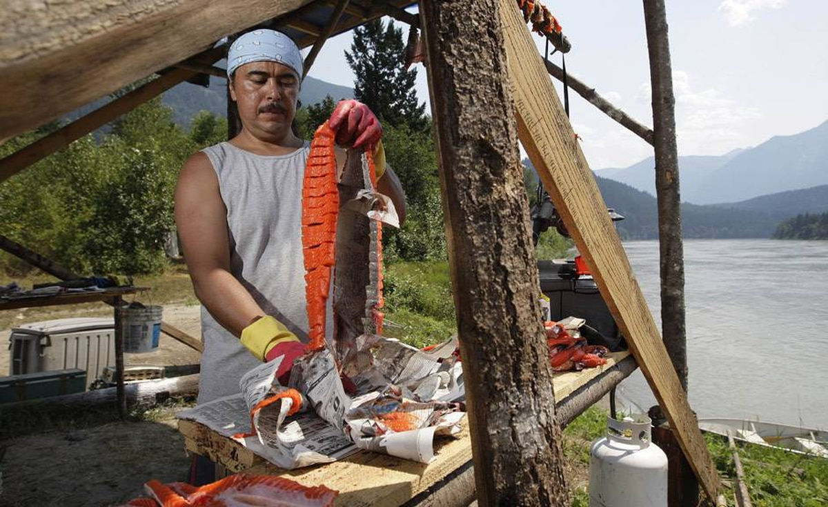 Tyrone McNeil of the Sto;lo Tribal Council prepares to hang sockeye salmon after cutting it into strips to be hung on a dry rack to cure for up to ten days on the banks of the Fraser river near Hope, BC.