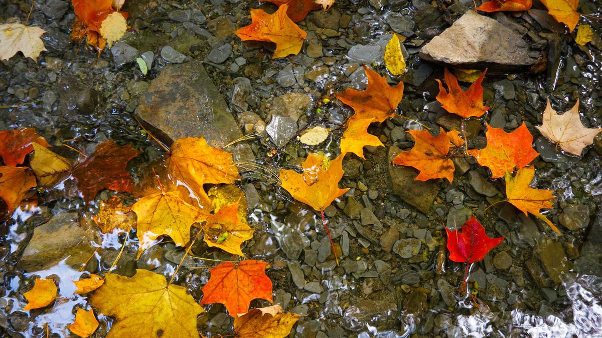 Daniel Gueorguiev of Etobicoke, Ont. shot this image on Sept. 26 of fallen leaves in a small stream near James Gardens and sent it in response to our fall colours assignment.