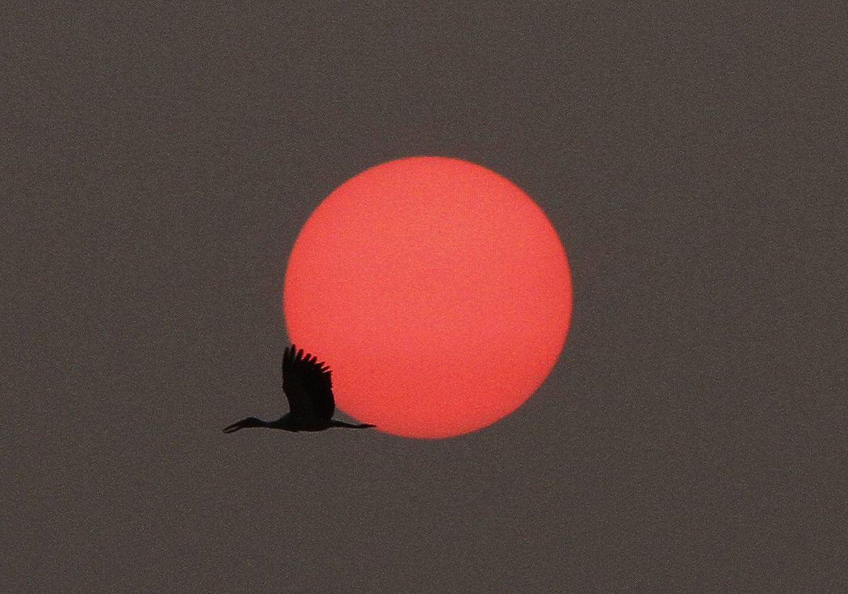 A stork flies back to its nest during sunset in Nakhonsawan province, 270 km (167 miles) north of Bangkok April 1, 2012.
