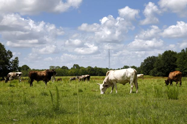 A short history of beef - The Globe and Mail