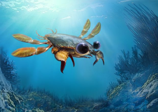 Scientists Discover 'Strangest Crab That Ever Lived'
