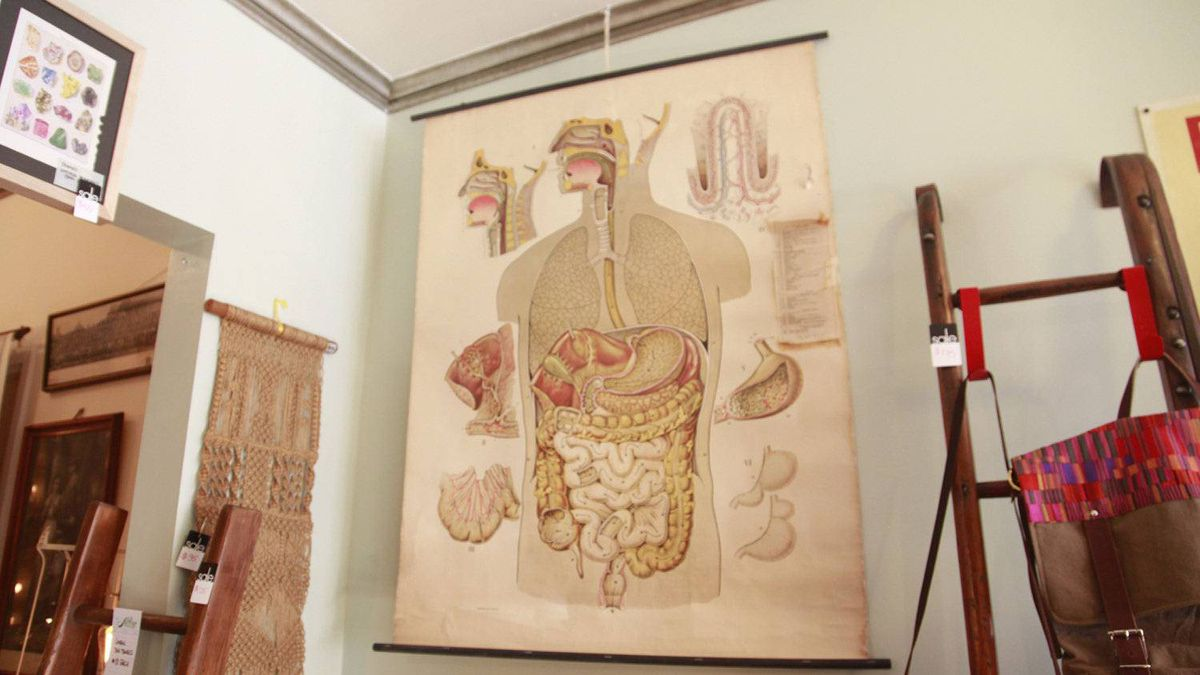 An anatomical chart hangs on display at the Arthur vintage decor in Toronto