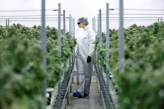 Canopy takes slow approach to legal pot; posts loss, shares slide