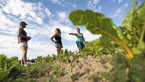 Matchbox Garden and Seed Co. owner Hanna Jacobs, right, shows Emily Minthorn, centre, and Kevin Smith where to begin harvesting beets on their 4-acre farm on conservation land at the Kortwright Conservation Centre in Woodbridge, Ontario Wednesday, July 13, 2011.